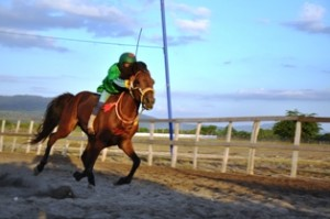 kuda laut 2