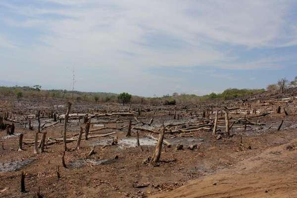 Kondisi hutan Pulau Moyo setahun silam