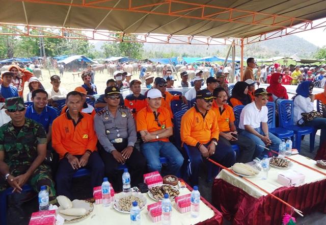 Bupati Sumbawa Didampingi Asisten I, Kadis Peternakan, kapolsek, dan Ketua Persatuan Kerbau Sumbawa