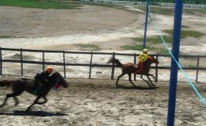 Kuda AUYS 2