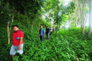Newmont Minahasa Hutan
