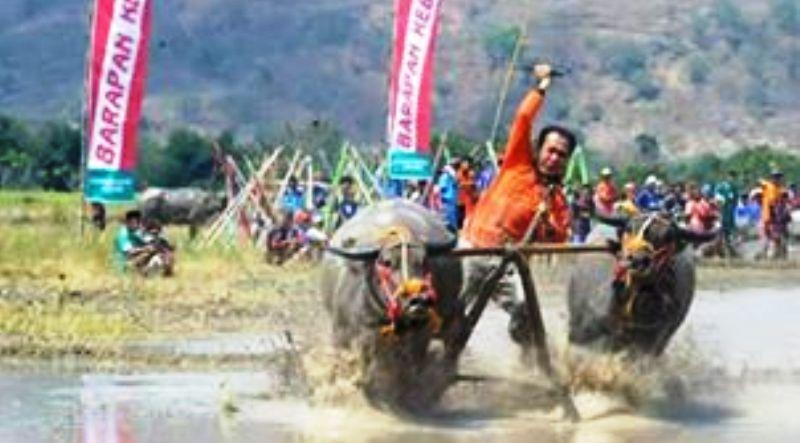 Barapan, Salah satu tradisi budaya yang secara tidak langsung menarik minat masyarakat untuk memelihara kerbau