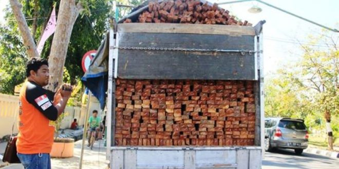 Kayu asal Dompu (Foto: Jim Gra)