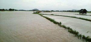 Banjir Rendam Sawah