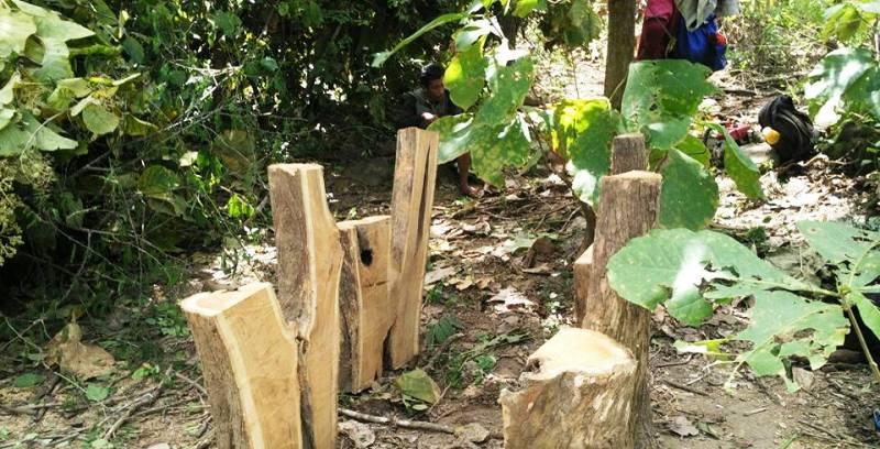 Pelaku Ilegal Loging 2