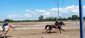 Kuda Juara 2