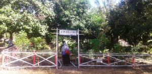 SMPN 3 Plampang kebun sekolah