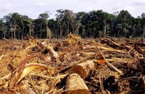 Ilegal Logging
